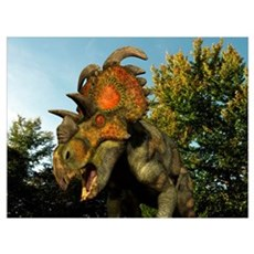 A Albertaceratops wanders a Cretaceous forest Poster