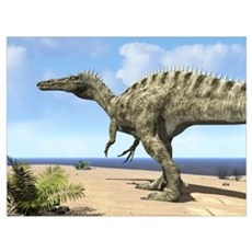 A carnivorous Suchomimus wanders a beach on the an Poster