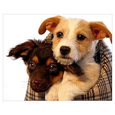 Puppies Wall Art Poster