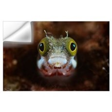 A Secretary Blenny looks out from its coral home Wall Decal