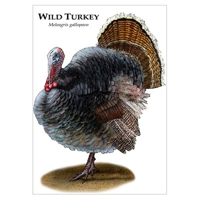 Wild Turkey Wall Art Poster