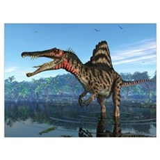 A Spinosaurus searches for its next meal Framed Print
