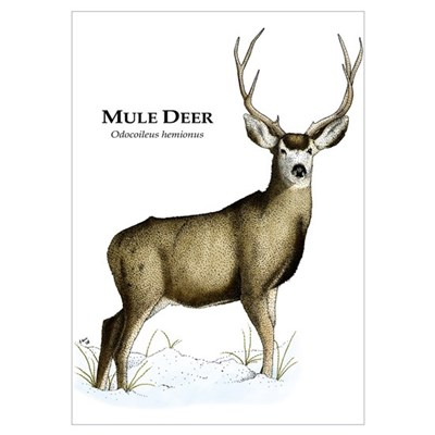Mule Deer Wall Art Poster