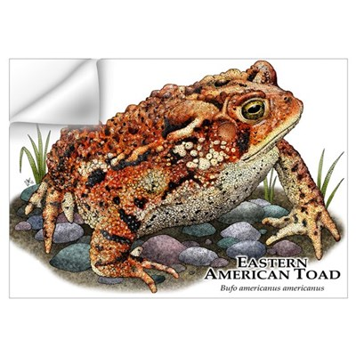 Eastern American Toad Wall Art Wall Decal
