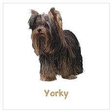 Yorkshire Terrier Wall Art Poster