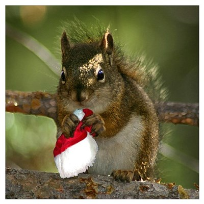 Squirrel Christmas Wall Art Poster