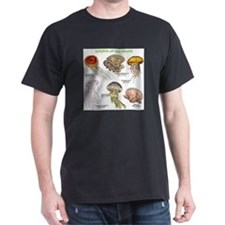 Jellyfish of the World T-Shirt