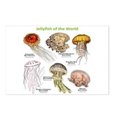 Jellyfish of the World Postcards (Package of 8)