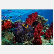 Orange-finned clownfish and soft corals on colorfu
