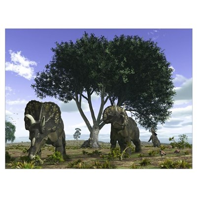 Nedoceratops graze beneath a giant Oak Tree Poster