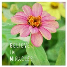 Believe in Miracles Zinnia Wall Art Poster