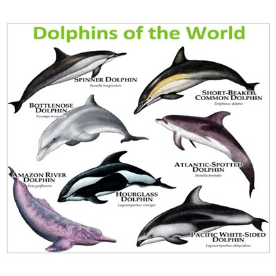 Dolphins of the World Wall Art Canvas Art