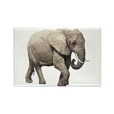 Elephant Rectangle Magnet
