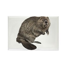 Beaver Rectangle Magnet