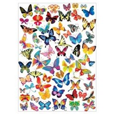 Butterflies Wall Art Poster