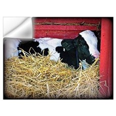 Cow Photo Poster Wall Decal