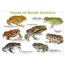 Toads of North America Wall Art