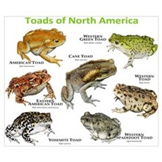 Toads of North America Wall Art Poster