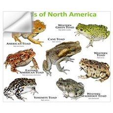 Toads of North America Wall Art Wall Decal