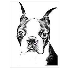 BOSTON TERRIER - DOG Wall Art Poster