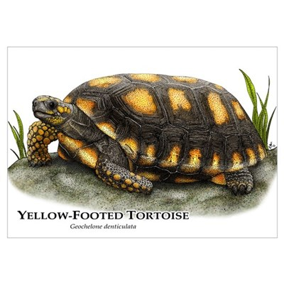 Yellow-Footed Tortoise Wall Art Poster