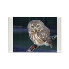 Saw-whet Owl Rectangle Magnet