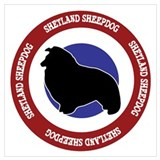 Shetland sheepdogs Posters