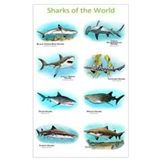 Sharks of the World Wall Art Poster