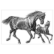 Beautiful Mare and Foal Wall Art Poster