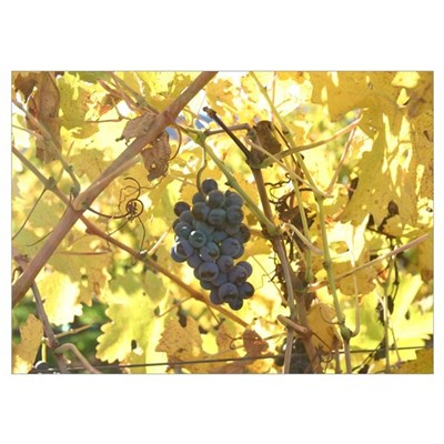 #21 purple grapes, yellow leaves fall 2004 Poster