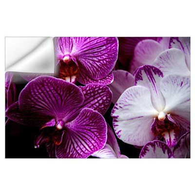 """Orchids"" Wall Art Wall Decal"