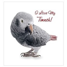 African Grey Parrot Holiday Wall Art Poster