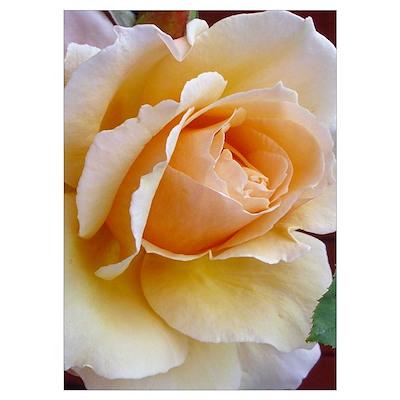 Pale Cream Rose Wall Art Poster