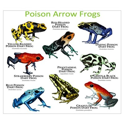Poison Dart Frogs of the Amazon Wall Art Poster