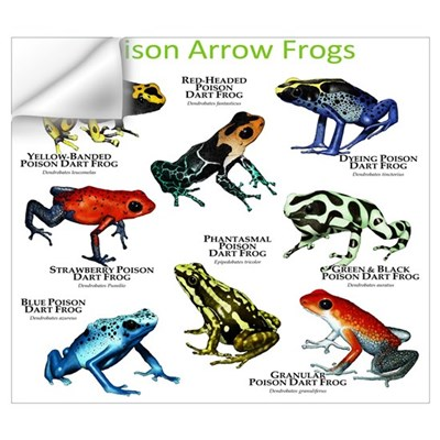 Poison Dart Frogs of the Amazon Wall Art Wall Decal