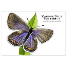 Karner Blue Butterfly Wall Art Canvas Art