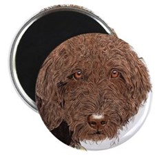 Chocolate Labradoodle 2 Magnet