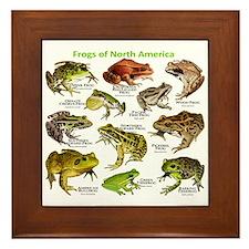 Frogs of North America Framed Tile
