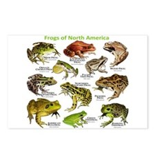 Frogs of North America Postcards (Package of 8)