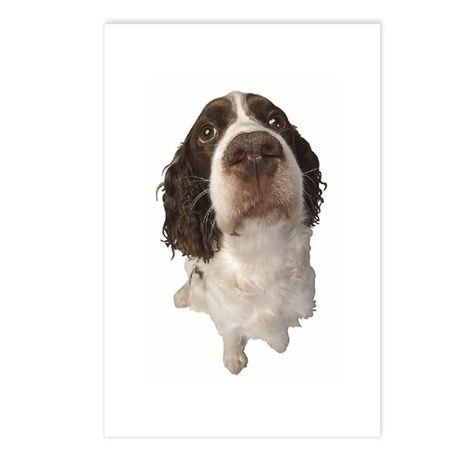 Springer Spaniel Close-Up Postcards (Package of 8)