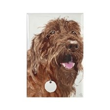 Chocolate Labradoodle3 Rectangle Magnet