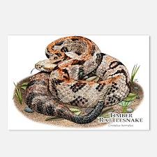 Timber or Canebrake Rattlesnake Postcards (Package
