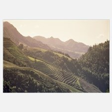 High angle view of a vineyard in a valley, Sonom,