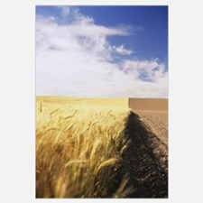 Half harvested wheat field, Palouse Country, Washi
