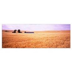 Barn in a wheat field, Palouse Country, Washington Poster
