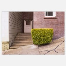 Trimmed hedge in front of house, San Francisco, Ca