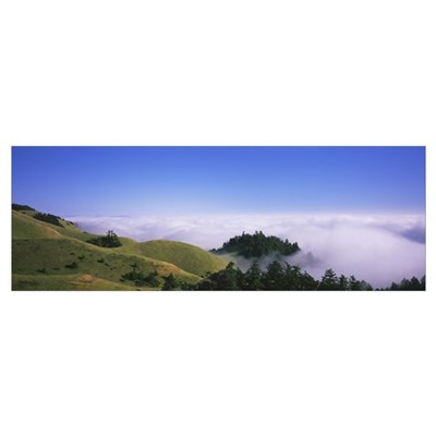 Trees on a landscape, Mt Tamalpais, California Poster
