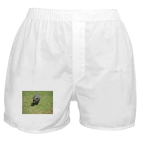 Pot Bellied Pig Boxer Shorts