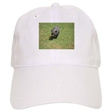 Pot Bellied Pig Baseball Cap