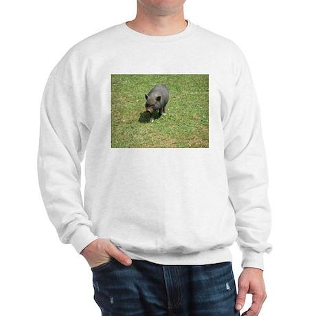 Pot Bellied Pig Sweatshirt